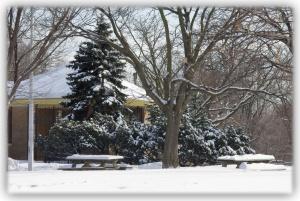 Faire une pause devant la beauté naturelle des choses... des arbres, des neiges venues d'ailleurs...